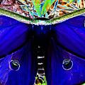 Luna Moth Uv Pano by David Lee Thompson