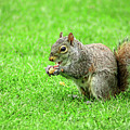 Lunchtime In The Park by Kevin Richardson