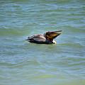 Lunchtime Pelican  by Deborah Weinhart