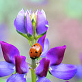Lupine And Friends by Mimi Ditchie