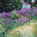 Lupine Cottage In Maine by Hillary Gross