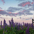 Lupines And Lighthouse by Darylann Leonard Photography