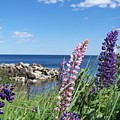Lupines At Lake Superior by Wendy Smith