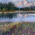 Lupines At Pilgrim Creek by Heather Coen