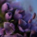 Luscious Lilac by Bonnie Bruno