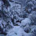 Luscious Snowfall by Catherine Robertson