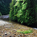 Lush Fern Canyon by Pierre Leclerc Photography