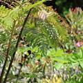 Lush Fern Garden In Pistachio And Citrus Green by Colleen Cornelius