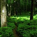 Lush Green At 2 by Raymond Salani III
