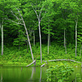 Lush Green Pond by Raymond Salani III