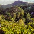 Lush Greenery While Trekking by Ashish Agarwal