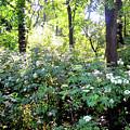 Lush Greens by Sharmila Taylor