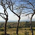 Lush Land Leafless Trees Iv by Madeline Ellis