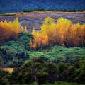 Lush New Zealand Countryside by Doug Sturgess