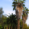 Lush Palms by Joanne Coyle