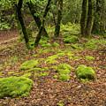 Lush Vegetation by Javier Flores