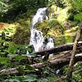 Lush Waterfall by Megan Thompson