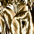 Lustrous Golden Tulip by Will Borden