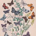 Lycaenidae by W Kirby