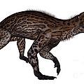 Lycaenops Dinosaur Walking, White by Elena Duvernay