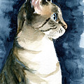 Lynx Point Cat Portrait by Dora Hathazi Mendes