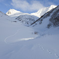 Lynx Tracks In A Mountain Pass by Tim Grams