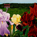 M S  O S Irises 2  by Ivan Rijhoff