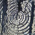 M Scored Into A Log by Tamara Kulish