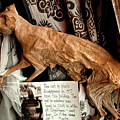 Macabre Mummified Cat - Halloween by Mitch Spence