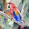 Macaw by Arline Wagner