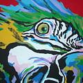 Macaw by Caroline Davis