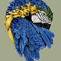Macaw by Crystal Rolfe