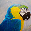 Macaw Head by Anne Marie Brown