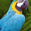 Macaw by JAMART Photography