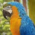 Macaw by Lori Hanks