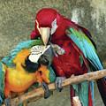 Macaw Love by Alycia Christine