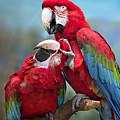 Macaw Love by Emma England