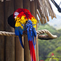 Macaw by Madeline Ellis