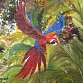 Macaw Parrot 3 by Cheryl Damschen