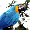 Macaw Parrot by FL collection
