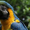 Macaw by Sue Harper