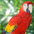 Macaw by Todd Hummel