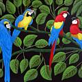 Macaws by Frederic Kohli