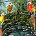Macaws by Silvana Miroslava Albano