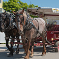 Mackinac Island Horse Carriage by Wesley Farnsworth