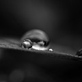 Macro - Black And White Drops by Danielle Silveira
