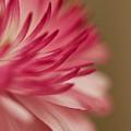 Macro - Pink Flower by Danielle Silveira