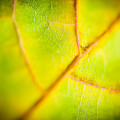 Macro Abstract Autumn Leaves by Raimond Klavins