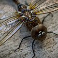 Macro Dragonfly by Stan Townsend
