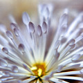 Macro Flower 3 by Lee  Santa